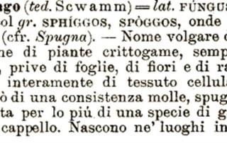 Incontro etimologia funghi Avis Bologna